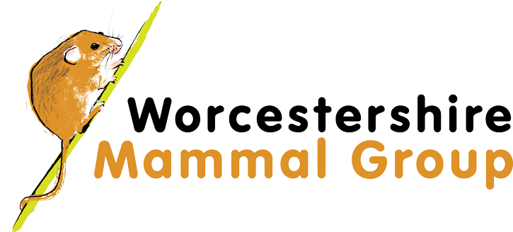 Worcestershire Mammal Group